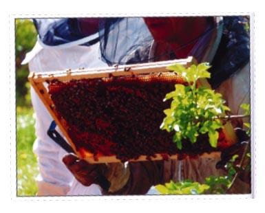 Du-jardin-au-rucher